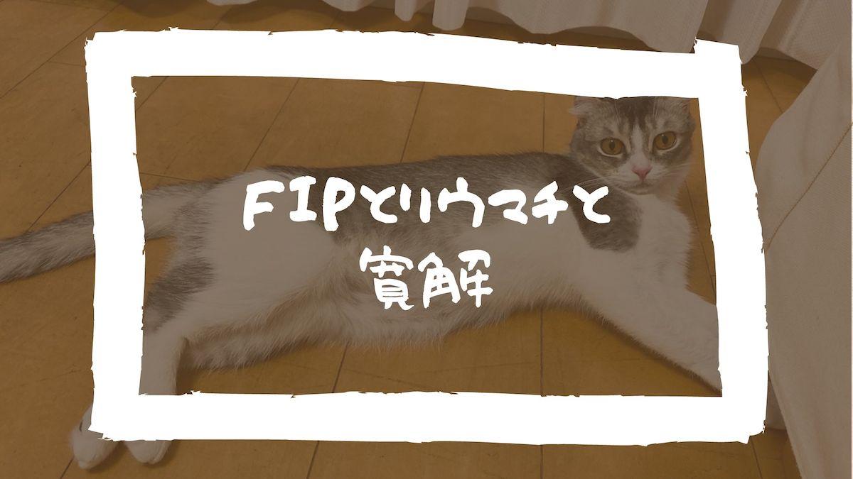 猫伝染性腹膜炎(FIP)とリウマチと寛解。