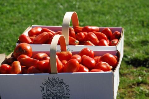 \そりゃ夏だ!/夏にぴったり!フレッシュトマトカレーのレシピを書いておくよ!!
